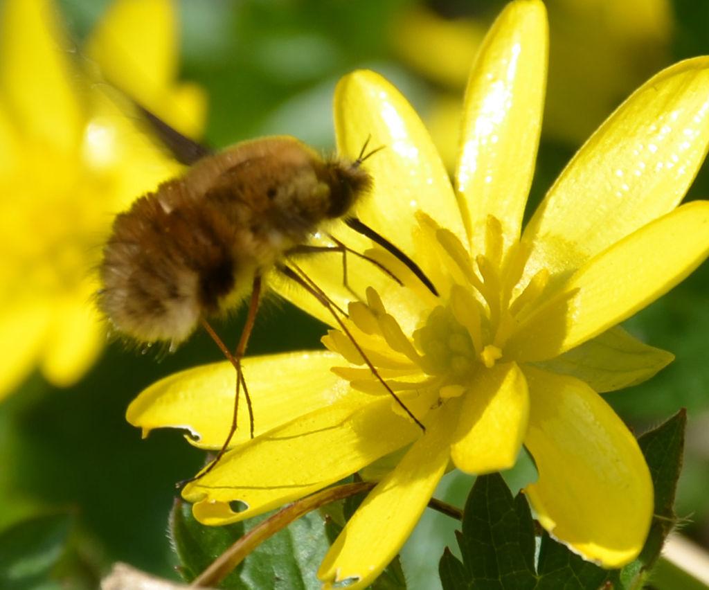 Copyright Wikipédia B.Lamiot