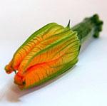 courgette-fleur