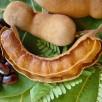 Crédits : http://caribfruits.cirad.fr/