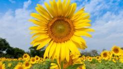 Crédits : http://blog.interflora.fr/