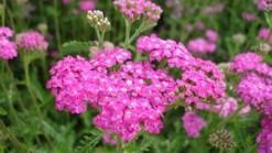 Crédits : http://images.jardiner-malin.fr/