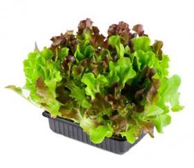 living_salad